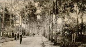 Nguyen Binh Khiem street with the tall trees and zoo hedges on right where I played hide and seek with my grandpa. Huong Clark Collection..
